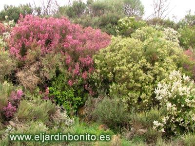 Cultivo de rboles y arbustos - Arboles y arbustos ...