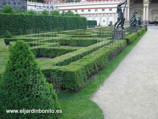 Boj buxus sempervirens for Jardines wallenstein