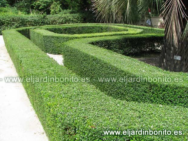 Setos de jardin precios finest seto setos with setos de - Setos de jardin ...