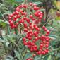 Lista de plantas rboles arbustos para sombra for Lista de plantas de sombra